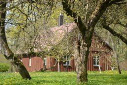 Žiedai ir darbai: kaip atrodo pavasaris kaimo sodyboje?